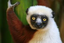 Madagascar / This board showcases Natural Habitat Adventures photos and travel tales from the richly bio-diverse country of Madagascar.