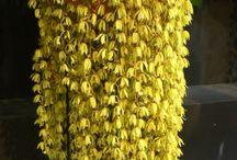 Orquideas  mi bello  rramo amarillas