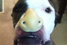 Buster Brown: Shelter Dog