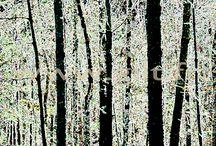 Arbres et Mousses / Arbres et Mousses : les créations de Gilt sur ce thème interpellent par leurs couleurs et leurs compositions graphiques