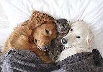 Zwierzęta przyjaźń ponad wszystko ...