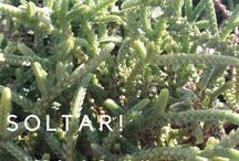 SOLTAR! / 0