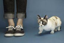 Gatos enanos / Mira las mejores fotos de gatos enanos.