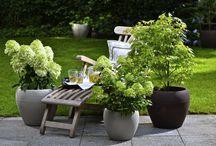 Donice ogród