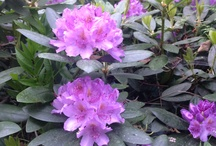 Garden Inspirations / Inspiration from flowers, plants
