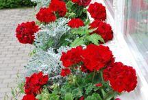 balkon- kwiaty