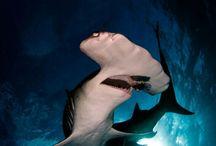 Fauna - Sea Life