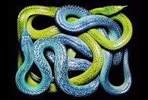 змеи, пресмыкающиеся