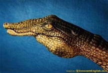 Animal hand Painting!! / by Holly Smeltzer
