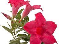 kasvit kukat puutarha