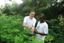 Afrika - die Heimat unseres Moringas / Moringa von www.theessenceofafrica.com kommt aus Afrika. Wie der Name schon sagt. Wir betätigen uns dabei hauptsächlich in Tansania und Malawi und helfen dort mit dem Anbau und der Vermarktung von Moringa auch der lokalen Bevölkerung, am Geschäftsleben teilzuhaben. Trade instead of aid - Handel auf Augenhöhe.