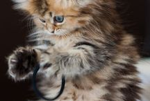 so fluffy! / its all about cuteness