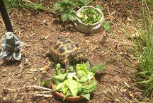 Tortoiseland