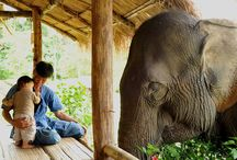 Thailand Family Adventures / Top family adventures in Thailand.