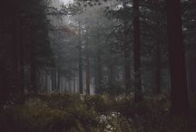 Deep Forest Aesthetic