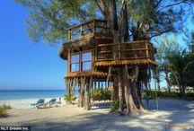 Treehouse & Backyard Ideas / by Dawn Davies