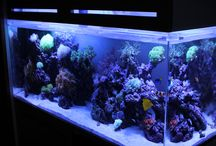 公共機関の水槽 / 公共機関の水槽 http://www.art-aquarium.jp/