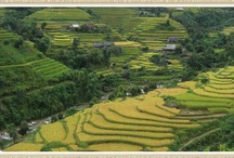 Vietnam travel / Upon arrival at Da Nang get on a tour of Da Nang City, including the Cham Museum, Marble Mountain. Continue to delightful township of Hoi An approximately 30 km away. Check in the hotel. Free time.