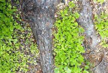 Applebaum Green