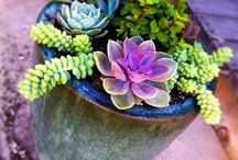 plants / by Natasha Osborn
