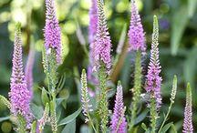 Gardens - Outdoors - Plants