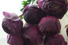 Flower - violet / Flower - violet