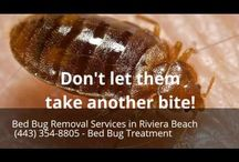 Bed Bug Removal Services in Riviera Beach MD (443) 354-8805 - Bed Bug Treatment