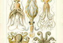 GROW.bio - Ernst Haeckel - Beacuse who doesnt love victorian field study drawings