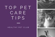 Top Pet Advice! / Some of our own advice on the best way to care for your pets!