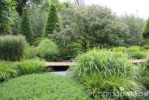 Ogród wyłącznie zielony