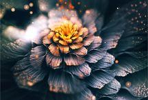Květiny abstraktní
