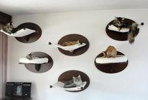 Katten maken