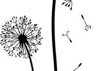 växter o blomfrön