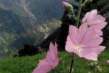 Mezei virágok - tájak