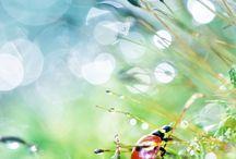 Nature / Luontokuvia