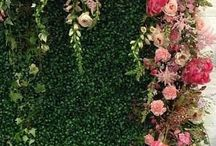 Стена зелёная и Цветы