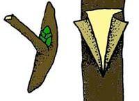 Stepenie stromcekov
