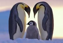 Pingvin csodák