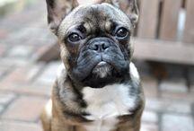 Dogs/Animals/Cuteness