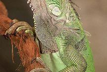 Iguanita:)