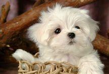 Pet...someday.