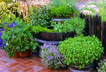Garden Ideas / by Jessica Hartkop