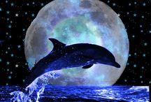 Blinge Dolphins