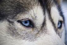 Fotografías de animales / Animales  / by Sergio I.