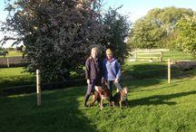 Dog Kennels Warwickshire