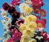 flowers / by Brenda Borchardt- Bardon