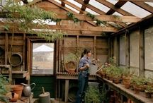 Gardening / Greenhouses and garden sheds / by Adam Ragan