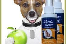 Canine Dental Care