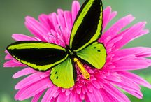 Pink Butterfly And Green Flower-Lilly Pulitzer