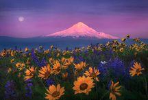 Oregon, Home Sweet Home / by Linn Cich-Jones